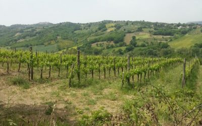 Vendita terreno agricolo Mirabella Eclano
